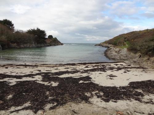 Algues au Nord